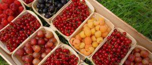 Gastronomie et produits locaux Monclar-de-Quercy Midi Pyrénées